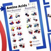 amino acids 3d prezi