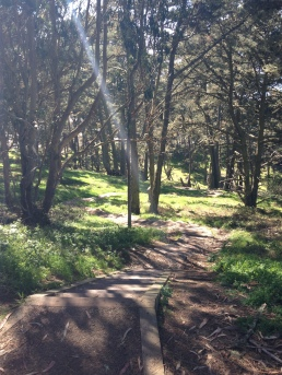 Presidio Path San Francisco Forest