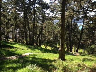 Presidio Path, SF, Forest