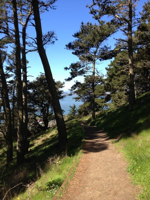 Presidio Path San Francisco Forest