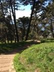 Presidio, Path, Sea, Forest, Green, San Francisco,
