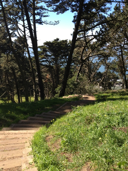 Presidio, Path, Sea, Forest, Green, San Francisco,