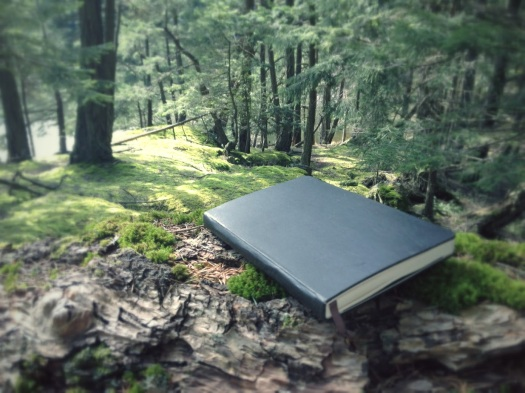 my notebook :), amy robinson, amy notebook, notebook, moleskin, notebook in woods